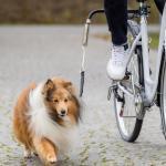 Trixie - Fahrradhalter Biker, Fahrradleine