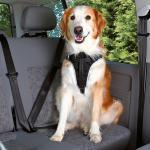 Trixie - Sicherheitsgeschirr, Sicherheitsgurt, Autogeschirr Protect Gr. M - Brustumfang 50 - 65 cm