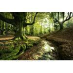 Wiedemann ALUMINIUMBILD Landschaft & Beige, Bäume Foresttale, Mehrfarbig, Metall, Kunststoff, 180x120 cm