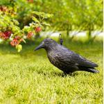Windhager Gartenfigur RABE 37 cm, schwarz (GLO692300070)